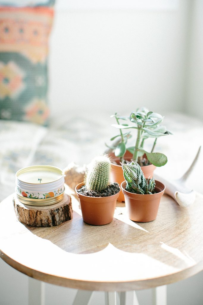 Soft afternoon light image of interior plants for AirBnB photography