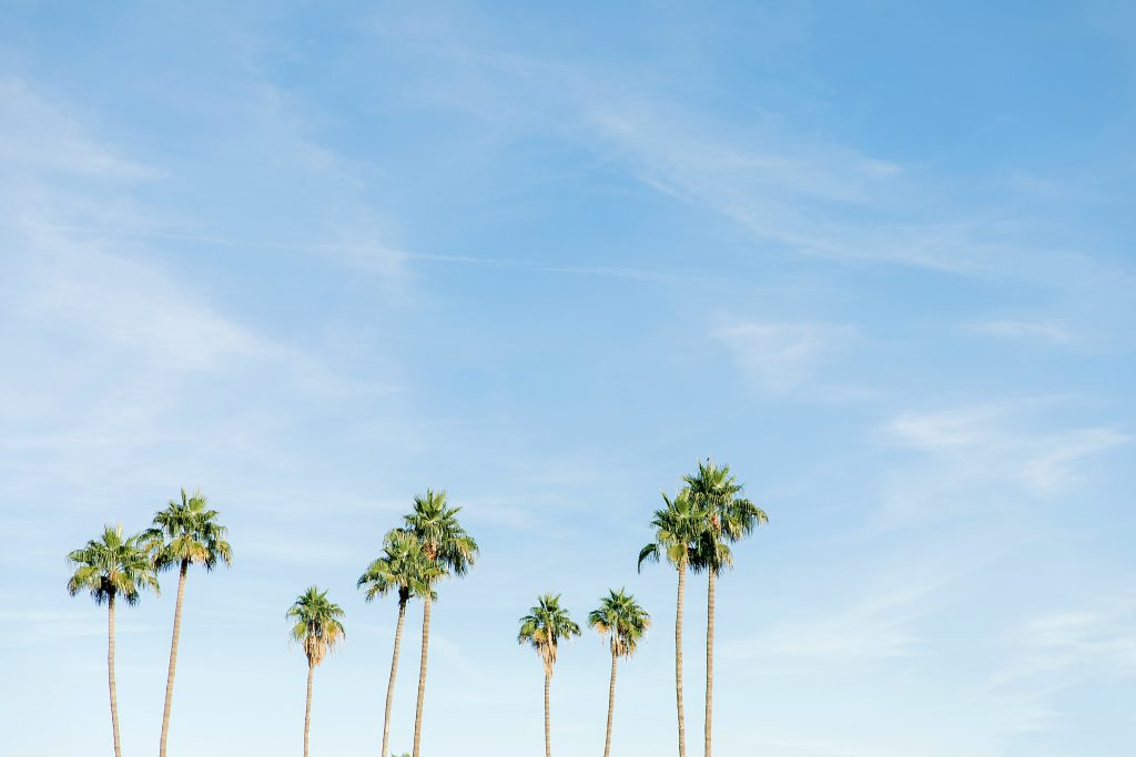 Arizona palm trees in the sky landscape photography